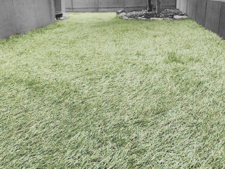 【DIY】人工芝を敷いてから1年が経過しました!
